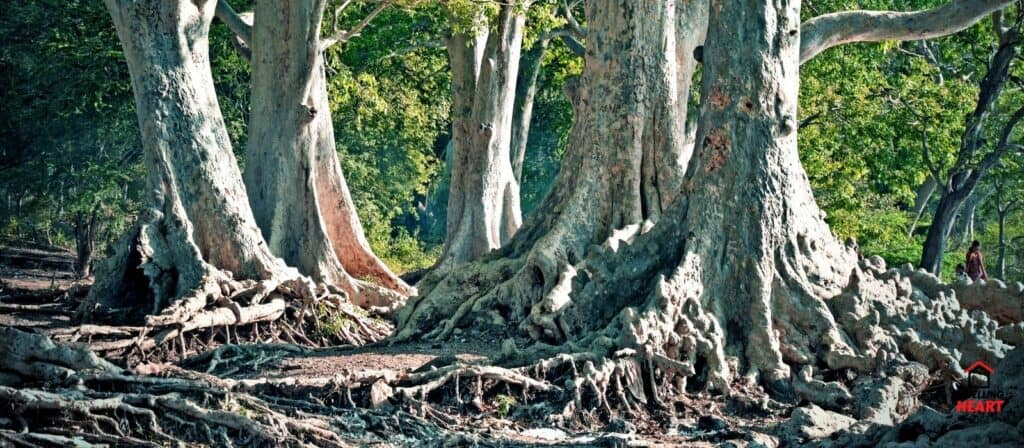 How To Kill Tree Roots Without Damaging Your Garden