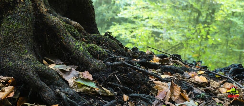 How To Kill Tree Roots Without Damaging Your Garden Best 10 Tips