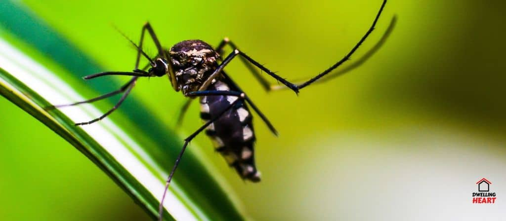 Top 5 Best Mosquito Fogger Insecticide
